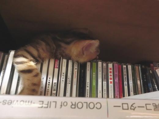 仔猫の寝る場所
