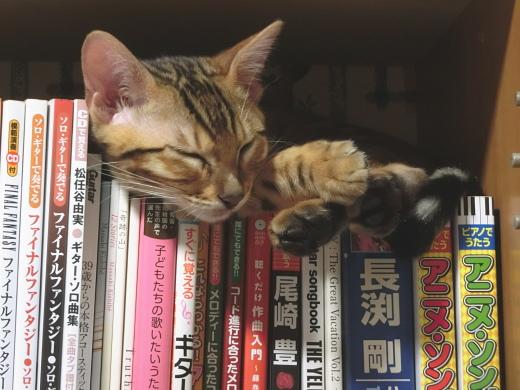 本棚と子猫2