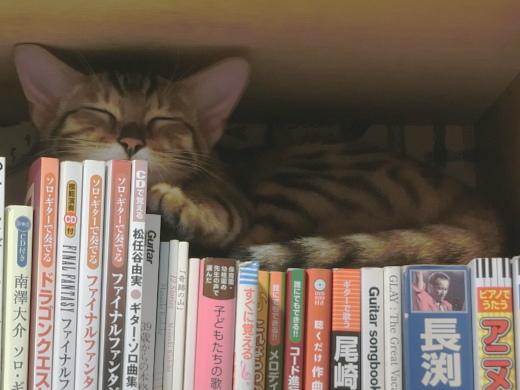 本棚と子猫3