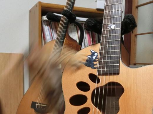 ギターから落ちる猫